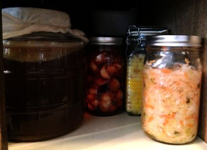 These are some the foods that I'm currently fermenting (left to right): kombucha, iranian garlic torshi, moroccan preserved lemons, and mixed sauerkraut